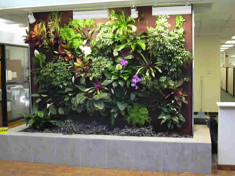 Brilliant Living Walls Vertical Plants 800 x 600 · 42 kB · jpeg