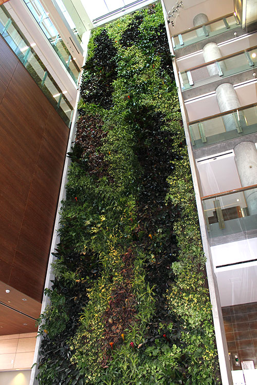 I Ll See Your Library Grass And Raise You My Faculty